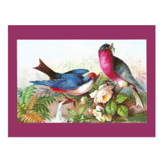 Colorful Birds, Roses & Waterspout Postcard