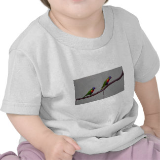Colorful Birds Walking on a Branch Photo Tees