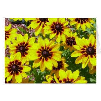 Colorful Black-eyed Susans Blank Greeting Card