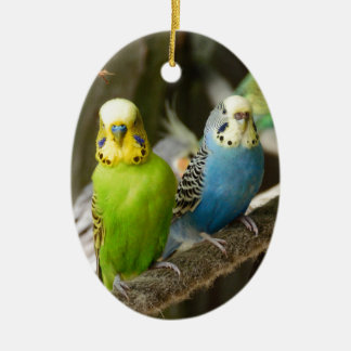 Colorful Budgie Bird Christmas Ornament