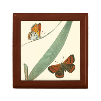 Colorful Butterflies Fluttering Around a Leaf Gift Box