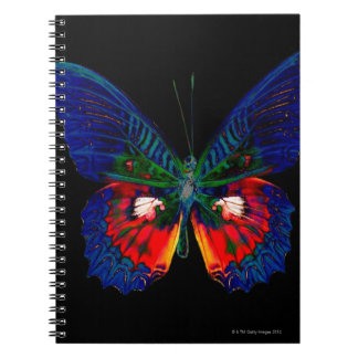Colorful Butterfly design against black backdrop 2 Notebook