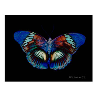 Colorful Butterfly design against black backdrop 2 Postcard