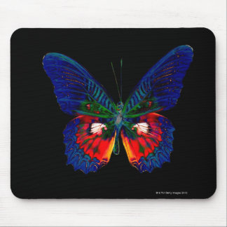 Colorful Butterfly design against black backdrop Mouse Pad