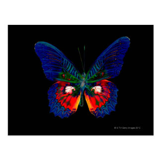 Colorful Butterfly design against black backdrop Postcard