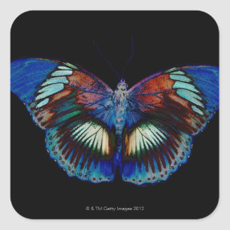 Colorful Butterfly design against black backdrop Square Sticker