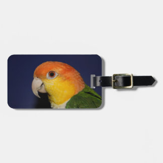 Colorful Caique Parrot Luggage Tag