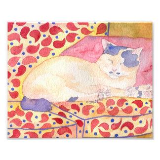 Colorful Cat on Sofa Art Print Photo Print