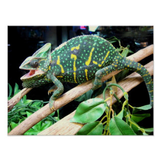 Colorful Chameleon Poster
