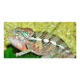 Colorful Chameleon with open mouth Custom Photo Card