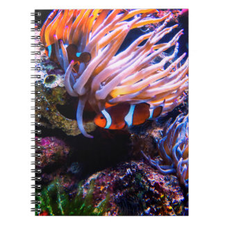 Colorful Clown-Fishes Spiral Note Book