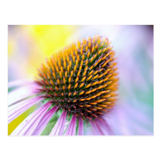 Colorful Cone Flower Postcards