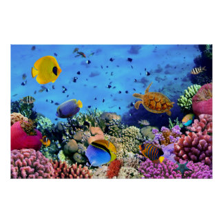 Colorful Coral Reef Critters Poster