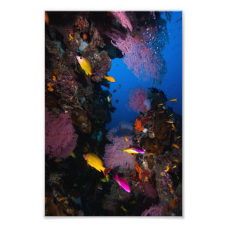 Colorful Coral Sea Photo Print