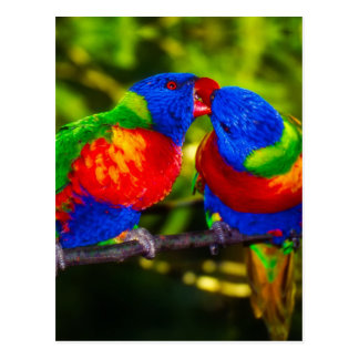 Colorful Couple of Parrots Postcard