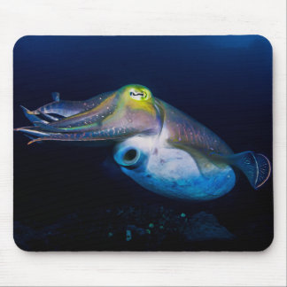 Colorful Cuttlefish Great Barrier Reef Coral Sea Mouse Pad