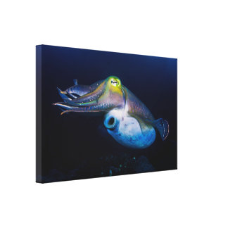 Colorful Cuttlefish Wrapped Canvas Canvas Prints