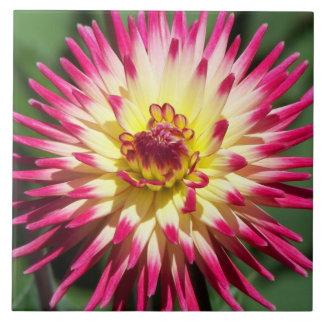 Colorful Dahlia Floral Photo Large Square Tile