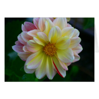 """""""COLORFUL DAHLIA"""" (PINK, WHITE, YELLOW) NOTE CARD"""