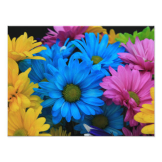 Colorful Daisies 1 Photographic Print