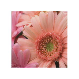 Colorful Daisies Wood Canvas