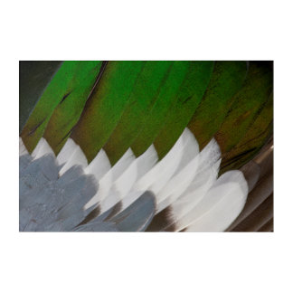 Colorful Duck Feather Abstract Acrylic Print