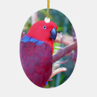 Colorful eclectus parrot christmas ornament