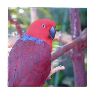 Colorful eclectus parrot tile