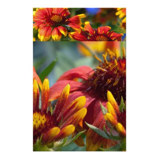 Colorful Exotic Flower Show : Greetings Blessings Personalized Stationery