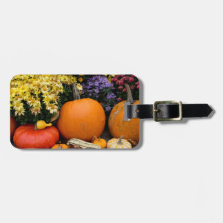 Colorful fall decorative pumpkin display luggage tag