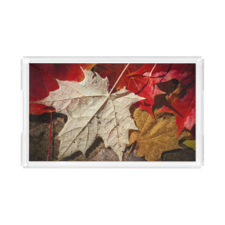 Colorful Fall Maple Leaves Floating Acrylic Tray