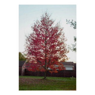 Colorful Fall Tree Photo Poster