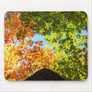 Colorful Fall Trees Mouse Mat