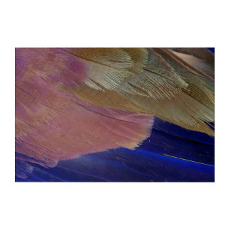 Colorful Feather Abstract Acrylic Wall Art