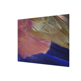 Colorful Feather Abstract Canvas Print