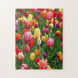 Colorful Field Of Tulips Flowers Jigsaw Puzzle