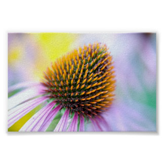 Colorful Flower Poster 6x4