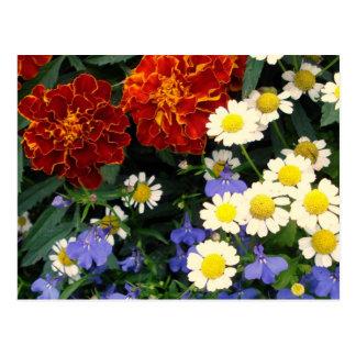 Colorful Flowerbed Postcard