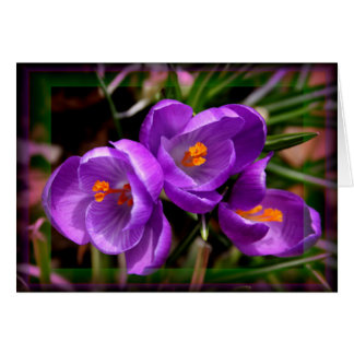 [Colorful Flowers] Crocus vernus  - Any Occasion Card
