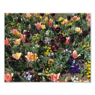 Colorful Flowers in a Garden Photo Print