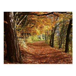 COLORFUL FOREST TRAIL POSTCARD