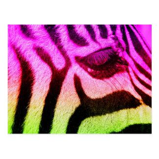 Colorful Funky Zebra Postcard