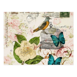 colorful girly white rose butterfly floral paris postcard