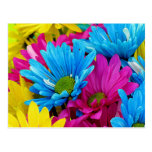 Colorful Hot Pink Teal Blue Gerber Daisies Flowers Post Card