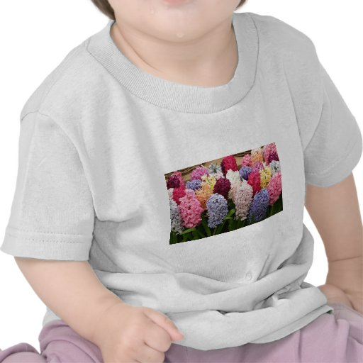 Colorful Hyacinth flowers in bloom 1 Tee Shirts