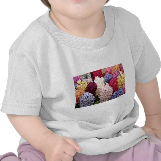 Colorful Hyacinth flowers in bloom 2 Tee Shirt