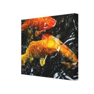 Colorful Koi Fish | Chengdu Canvas Print