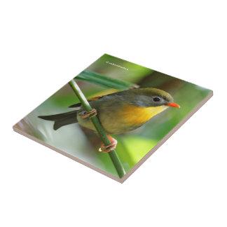 Colorful Leiothrix / Pekin Robin Songbird Small Square Tile