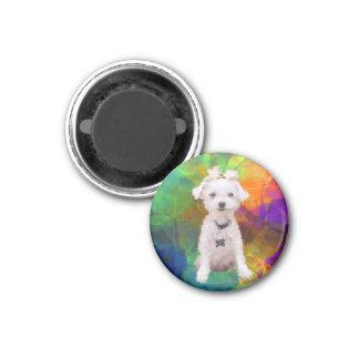 Colorful Little Maltese Magnet