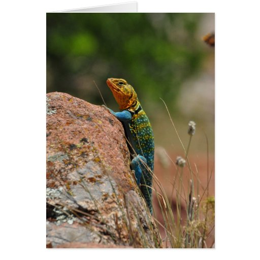 Colorful Lizard Greeting Cards